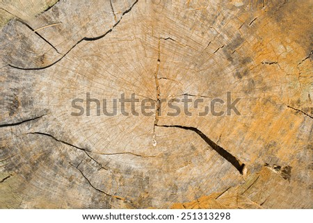 Cut of Old wooden structure for a background - stock photo