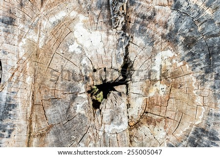 Cut of Old wooden structure for a background