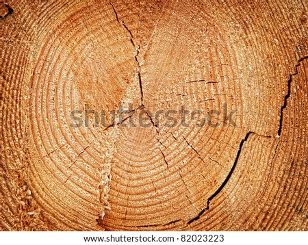 Cut off log with the growth rings - stock photo