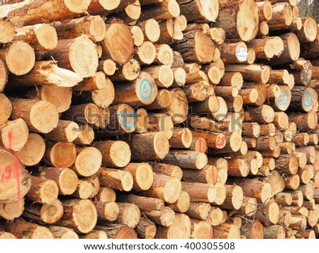 Cut pine logs stacked up for transport in a forest near Nuremberg, Germany 2016 - stock photo