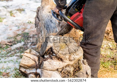cut the old tree chainsaw