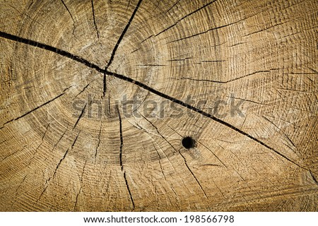 Cut tree trunk with wood grain texture as background - stock photo