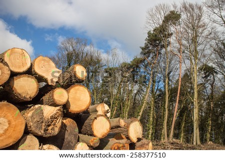 Cut tree trunks next to trees in forest - stock photo