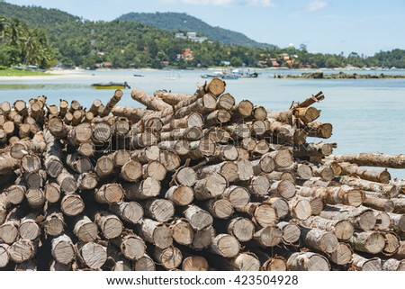 Cut trees piled at construction site, Koh Samui, Thailand.