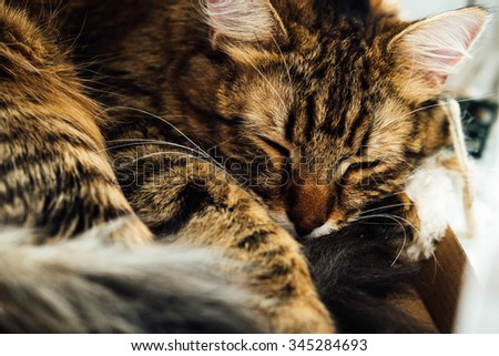 cute adorable sweet kitten sleeping, having rest in his home place spot