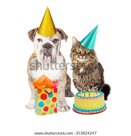 Cute adult Bulldog breed dog and tabby cat wearing birthday party hats with a cake and present