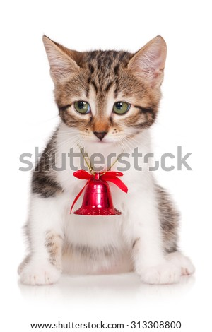Cute adult tabby with yellow eyes over blue background