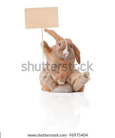 Cute and beautiful rabbit sitting. Sign in his paw over his head. Isolated on white background, reflection, a lot of copy space. - stock photo