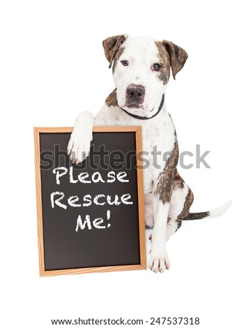 Cute and friendly Pit Bull Dog holding a chalkboard with the words Please Rescue Me - stock photo