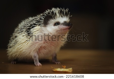 cute and fun hedgehog baby