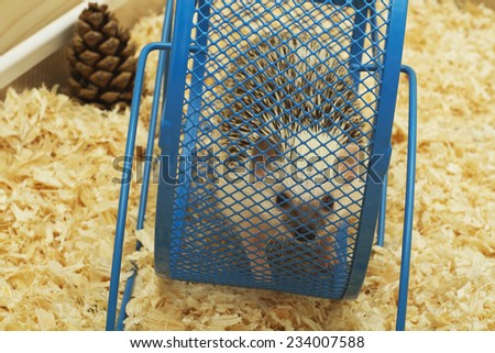 cute and fun hedgehog baby with breeding facility background - stock photo