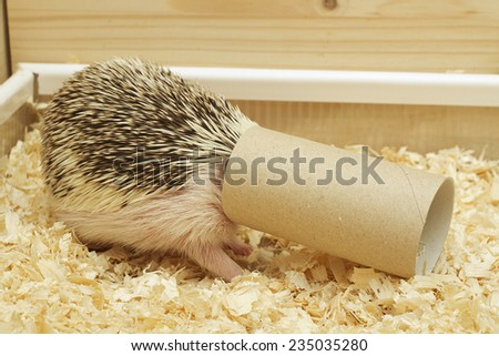 cute and fun hedgehog baby with roll - stock photo