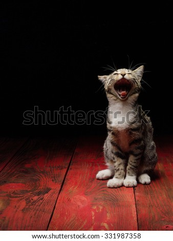 Cute and funny kitty cat on red wooden table and black background - stock photo