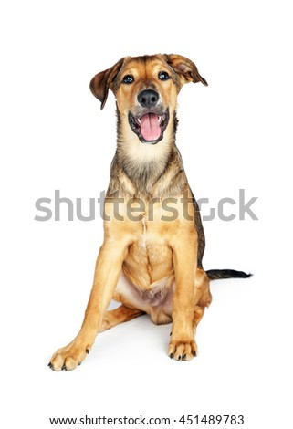 Cute and happy little puppy with mouth open, sitting on white background