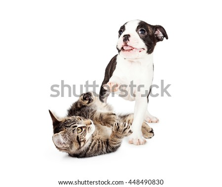 Cute and playful kitten and puppy together on white studio background