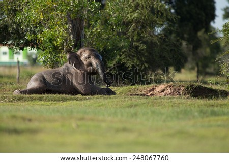 Cute Asian elephant splashing with water while taking a bath - stock photo