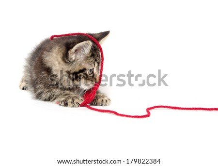 Cute baby American shorthair tabby kitten with red yarn on white background - stock photo