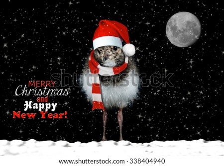 Cute baby bird wishing you happy holidays - stock photo