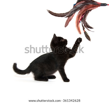 Cute baby black kitten playing isolated on white background - stock photo