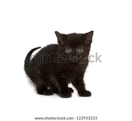 Cute baby black kitten playing on white background