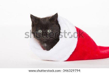 Cute baby black kitten sitting inside of red Christmas stocking on white background