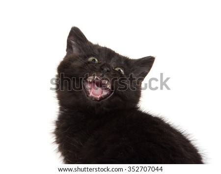 Cute baby black kitten with its mouth open crying isolated on white background - stock photo