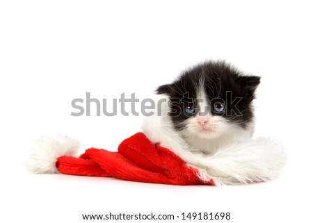 Cute baby cat inside Santa's hat isolated in white - stock photo