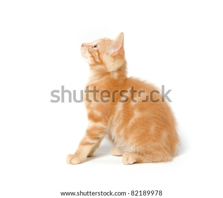 Cute baby cat on white background