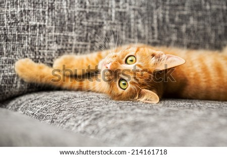 Cute baby cat playing  - stock photo