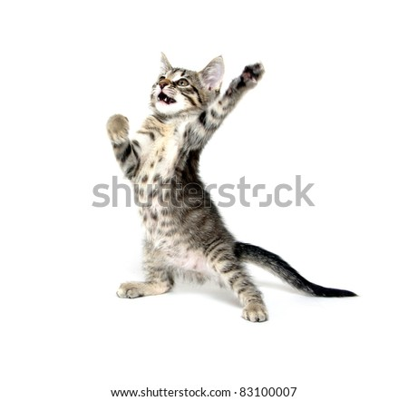 Cute baby cat playing on white background - stock photo