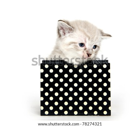 Cute baby cat sitting inside of black box with polka dots on white background