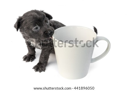 Cute baby dog  licking empty mug on white background, soft and blur focus