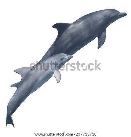 Cute baby dolphin with mother isolated on the white background - stock photo