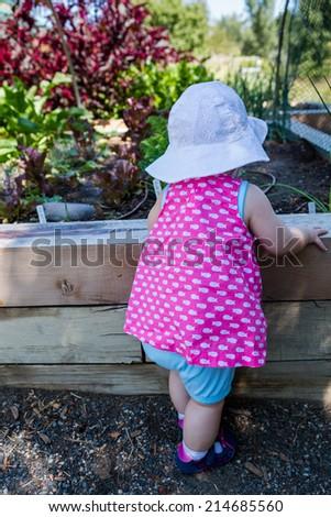 Cute baby girl exploring vegetables in organic urban garden. - stock photo