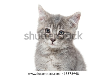 Cute baby gray kitten isolated on white background
