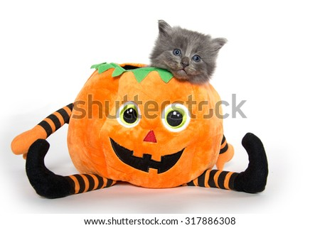 Cute baby gray kitten sitting inside of halloween decoration shaped like a pumpkin isolated on white background - stock photo