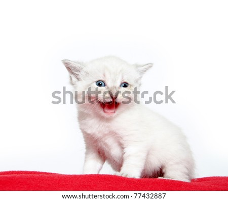 Cute baby kitten laying down on red blanket with white background