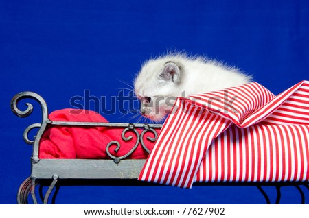 Cute baby kitten laying on a bed with red sheets on blue background