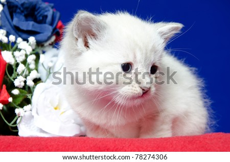 Cute baby kitten on a red blanket with flowers on blue background