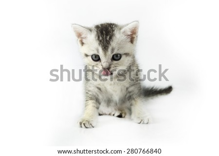 Cute baby kitten on white background