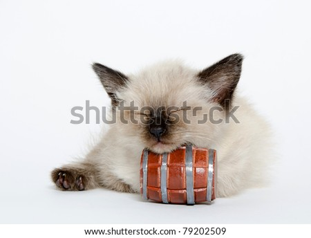 Cute baby kitten resting its head on a barrel while sleeping on white background