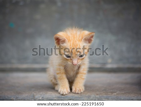Cute baby kitten sit on the floor. - stock photo