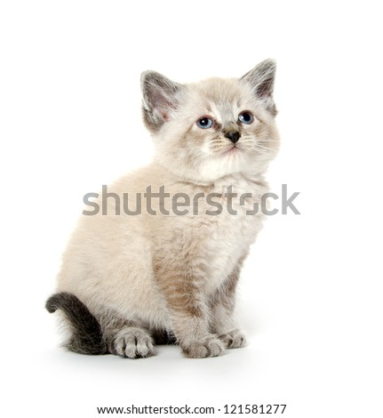 Cute baby kitten sitting and resting on white background