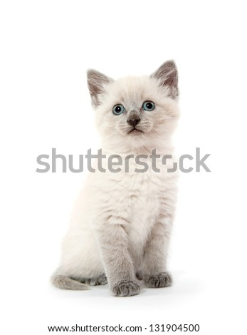 Cute baby kitten sitting down on white background