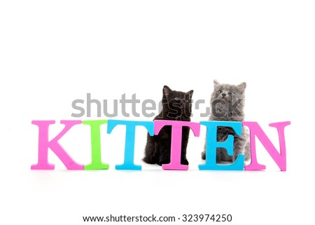 Cute baby kittens sitting behind a sign isolated on white background - stock photo
