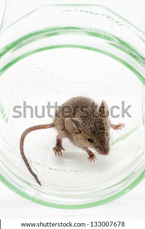 Cute baby mouse in a jam jar - stock photo
