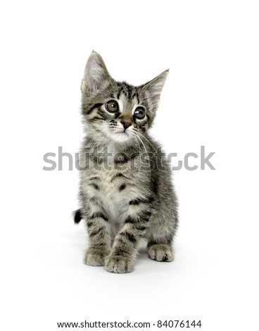 Cute baby tabby cat sitting on white background