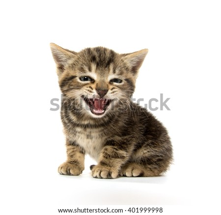 Cute baby tabby kitten crying isolated on white background - stock photo