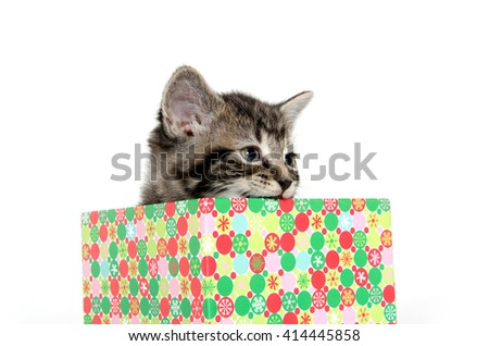 Cute baby tabby kitten in colorful box on white background