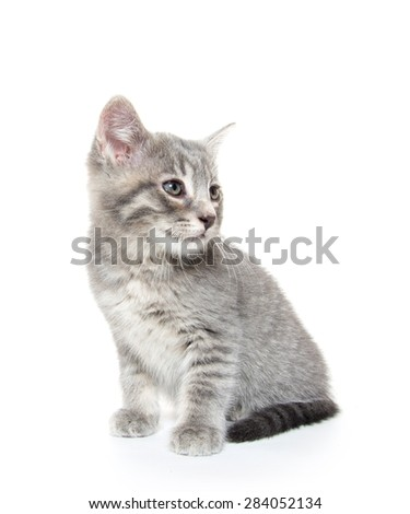 Cute baby tabby kitten isolated on white background  - stock photo